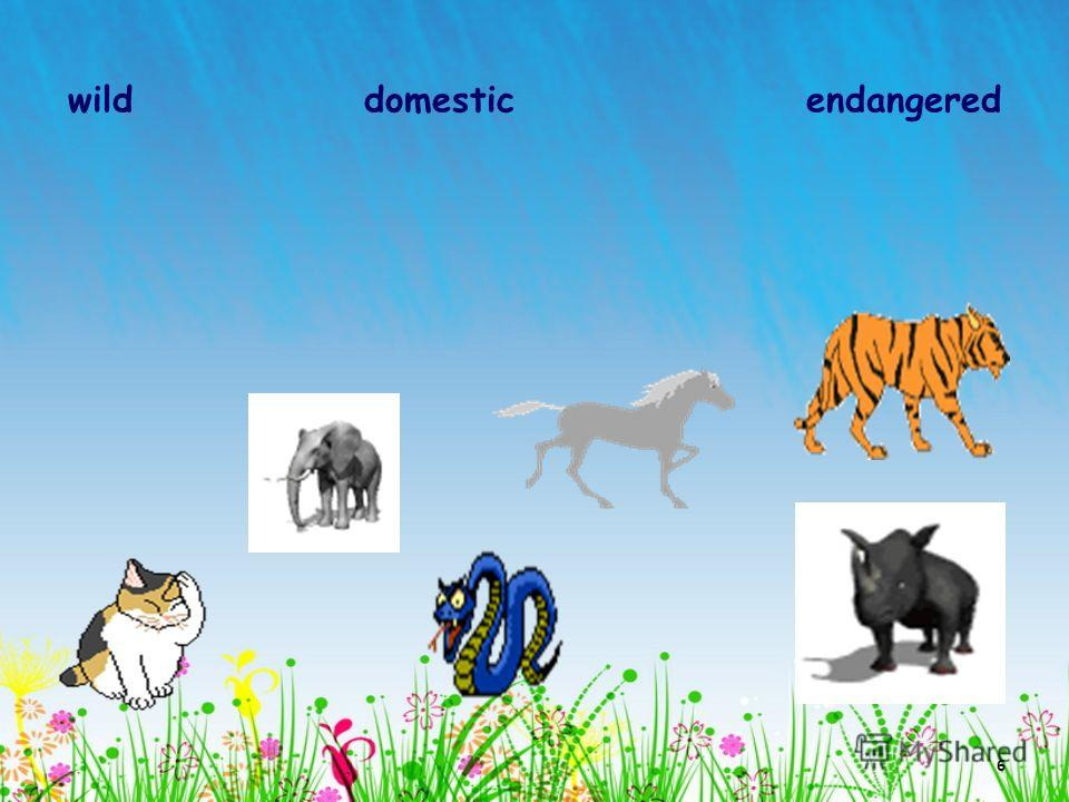 6 wild domestic endangered