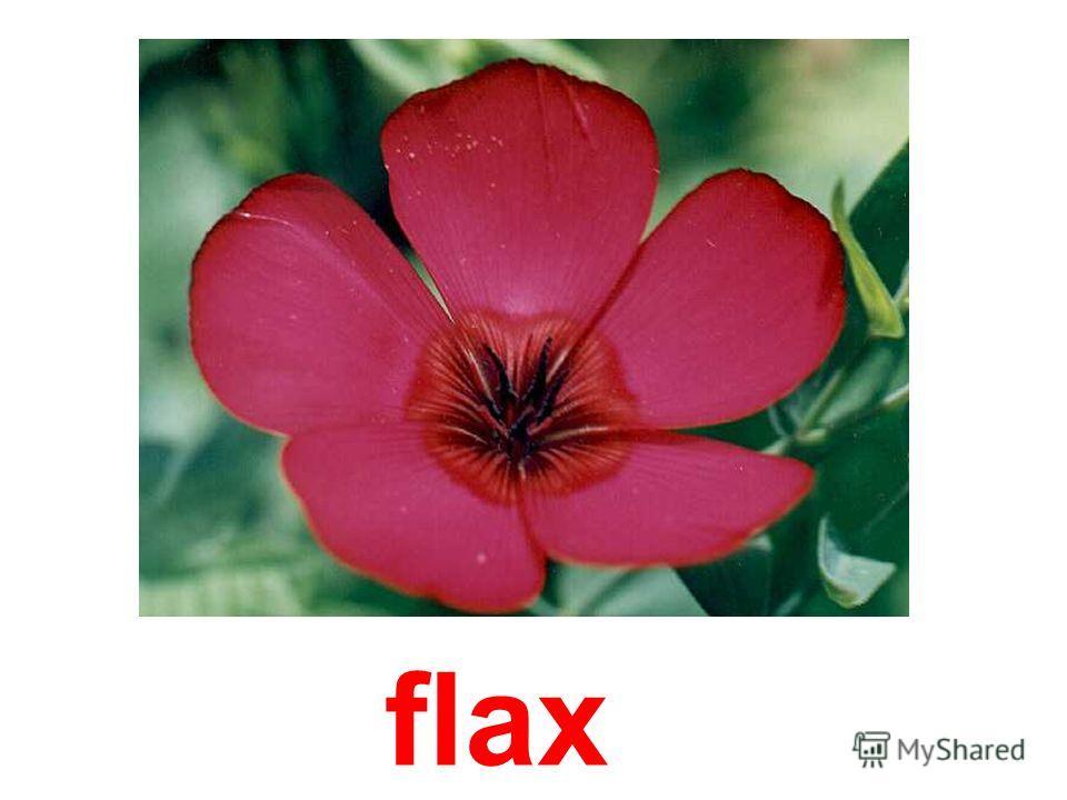 finger- flower