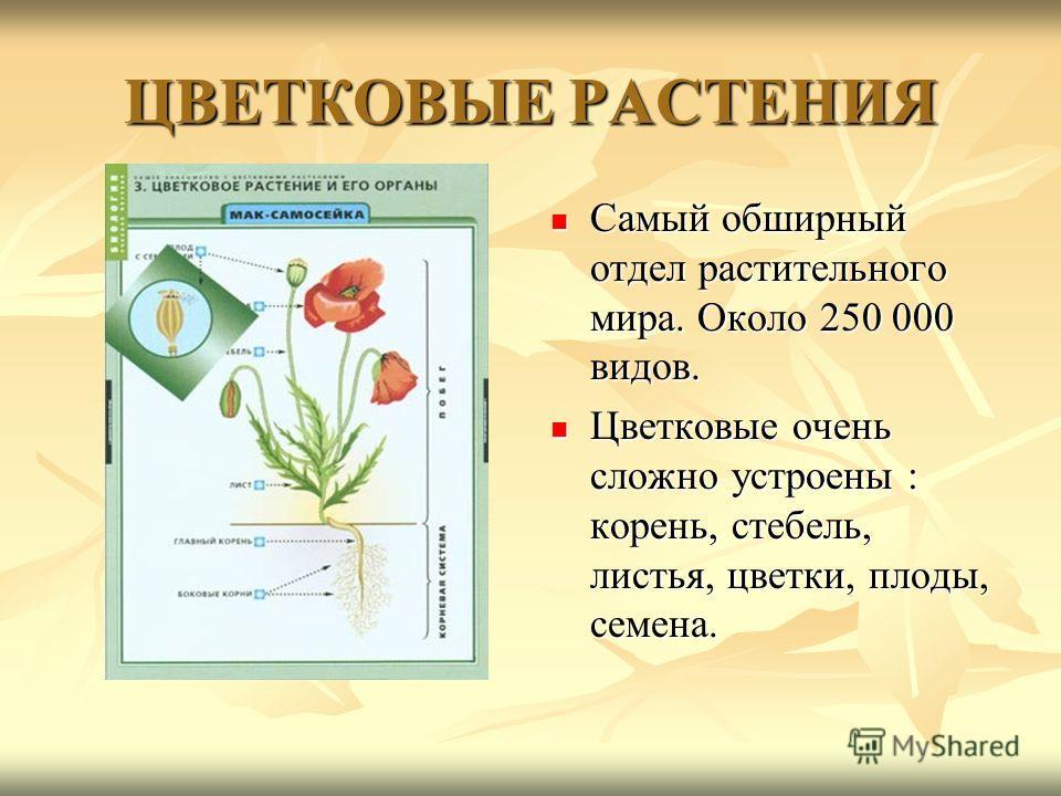 ЦВЕТКОВЫЕ РАСТЕНИЯ Самый обширный отдел растительного мира. Около 250 000 видов. Самый обширный отдел растительного мира. Около 250 000 видов. Цветковые очень сложно устроены : корень, стебель, листья, цветки, плоды, семена. Цветковые очень сложно ус
