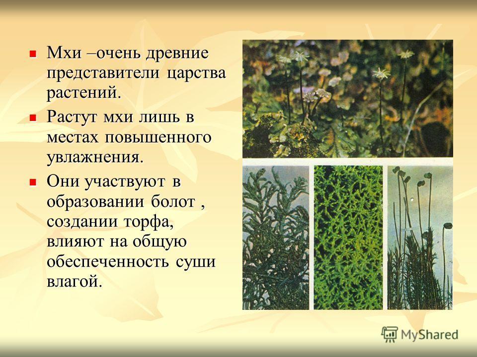 Мхи –очень древние представители царства растений. Мхи –очень древние представители царства растений. Растут мхи лишь в местах повышенного увлажнения. Растут мхи лишь в местах повышенного увлажнения. Они участвуют в образовании болот, создании торфа,