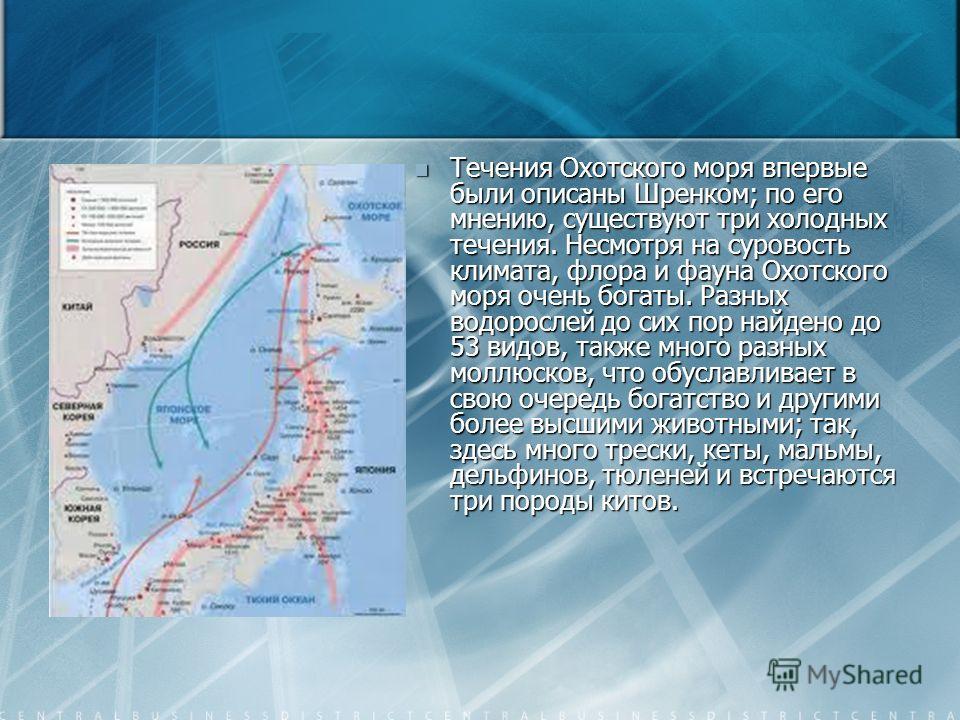 Течения Охотского моря впервые были описаны Шренком; по его мнению, существуют три холодных течения. Несмотря на суровость климата, флора и фауна Охотского моря очень богаты. Разных водорослей до сих пор найдено до 53 видов, также много разных моллюс