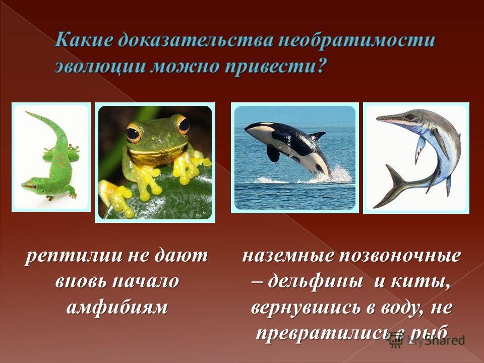 рептилии не дают вновь начало амфибиям наземные позвоночные – дельфины и киты, вернувшись в воду, не превратились в рыб