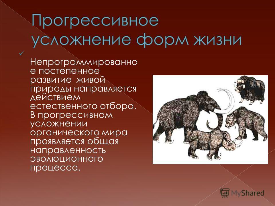 Непрограммированно е постепенное развитие живой природы направляется действием естественного отбора. В прогрессивном усложнении органического мира проявляется общая направленность эволюционного процесса.