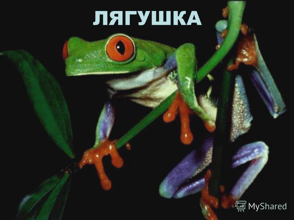 ГОЛОВАСТИК Всего голова и хвостик, Я - маленький головастик, скажу по секрету на ушко, я стану - зелёной лягушкой! Ква – ква!