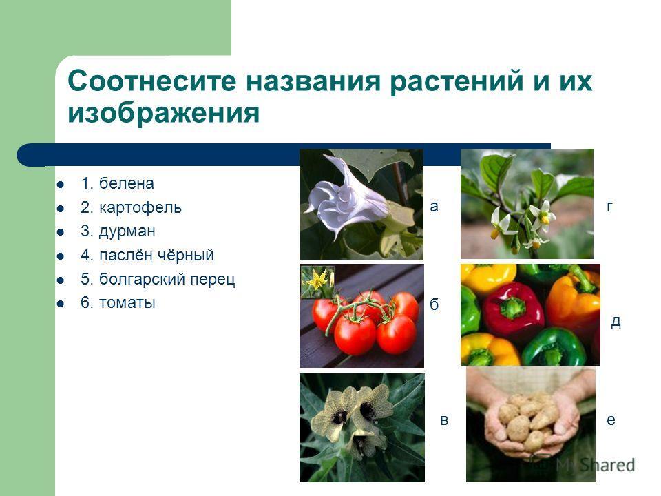 Соотнесите названия растений и их изображения 1. белена 2. картофель 3. дурман 4. паслён чёрный 5. болгарский перец 6. томаты а б в г д е