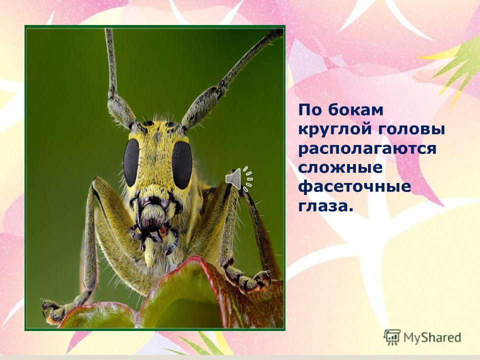 Все представители семейства разные по форме и длине тела, окраске, форме надкрылий, наличию шипов, бугров.