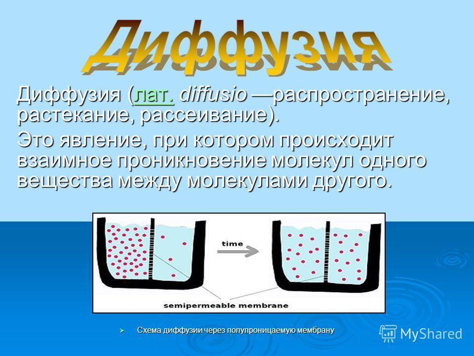 Диффузия (лат. diffusio распространение, растекание, рассеивание). лат. Это явление, при котором происходит взаимное проникновение молекул одного вещества между молекулами другого. Схема диффузии через полупроницаемую мембрану Схема диффузии через по