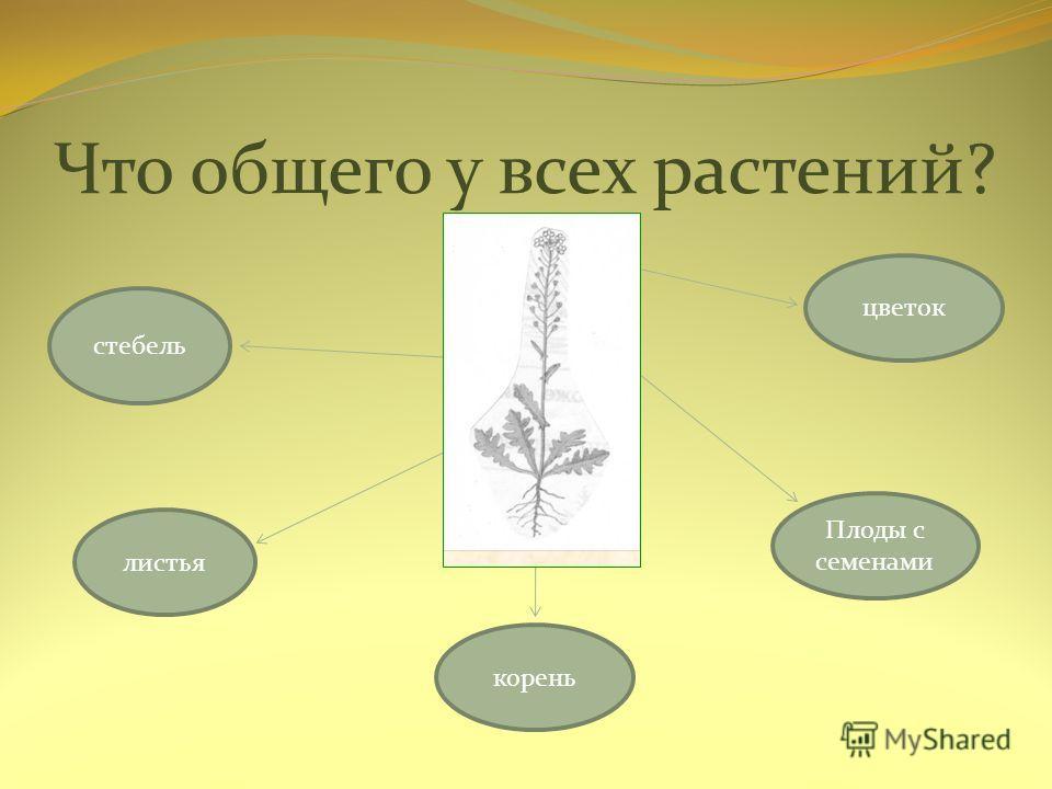 К какой группе растений мы отнесем те, которые растут на подоконнике? Комнатные растения
