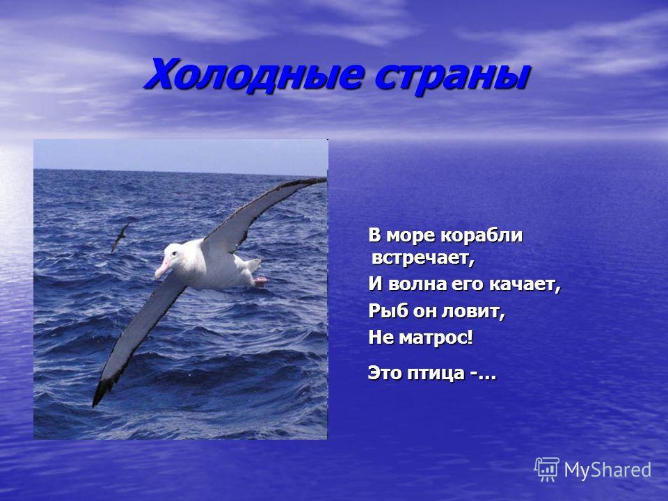 Холодные страны В море корабли встречает, В море корабли встречает, И волна его качает, И волна его качает, Рыб он ловит, Рыб он ловит, Не матрос! Не матрос! Это птица -… Это птица -…