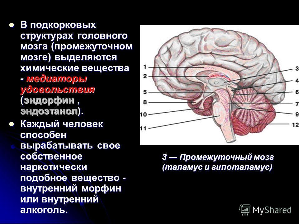 В подкорковых структурах головного мозга (промежуточном мозге) выделяются химические вещества - медиаторы удовольствия (эндорфин, эндоэтанол). В подкорковых структурах головного мозга (промежуточном мозге) выделяются химические вещества - медиаторы у