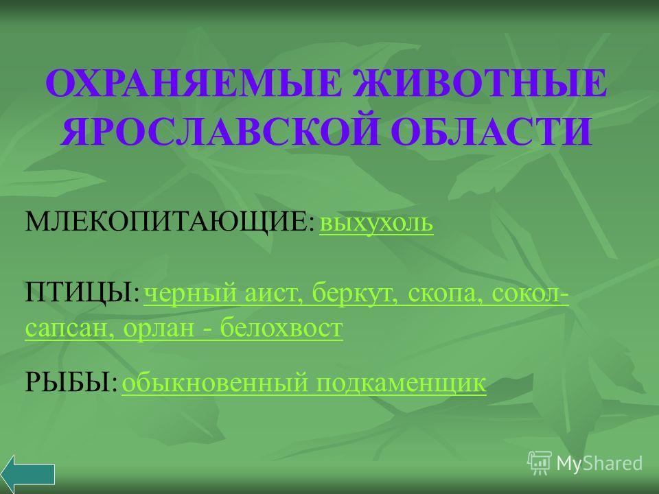 ОХРАНЯЕМЫЕ ЖИВОТНЫЕ ЯРОСЛАВСКОЙ ОБЛАСТИ МЛЕКОПИТАЮЩИЕ: выхухоль выхухоль ПТИЦЫ: черный аист, беркут, скопа, сокол- сапсан, орлан - белохвост черный аист, беркут, скопа, сокол- сапсан, орлан - белохвост РЫБЫ: обыкновенный подкаменщик обыкновенный подк