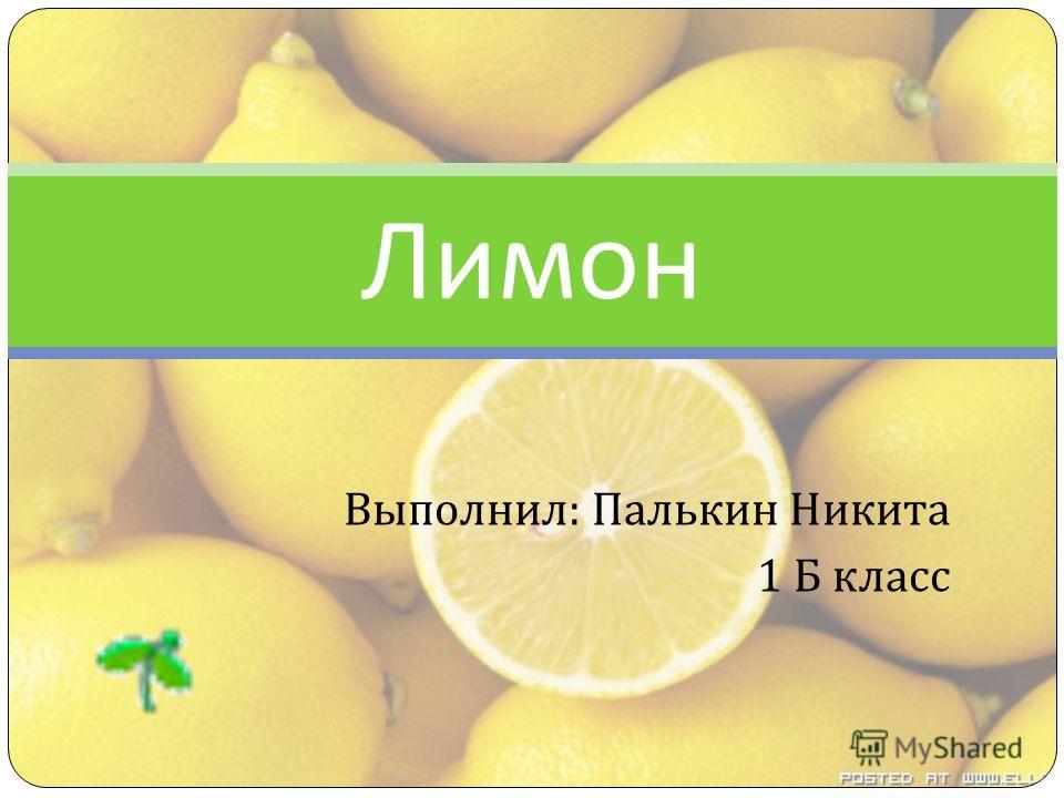 Выполнил : Палькин Никита 1 Б класс Лимон