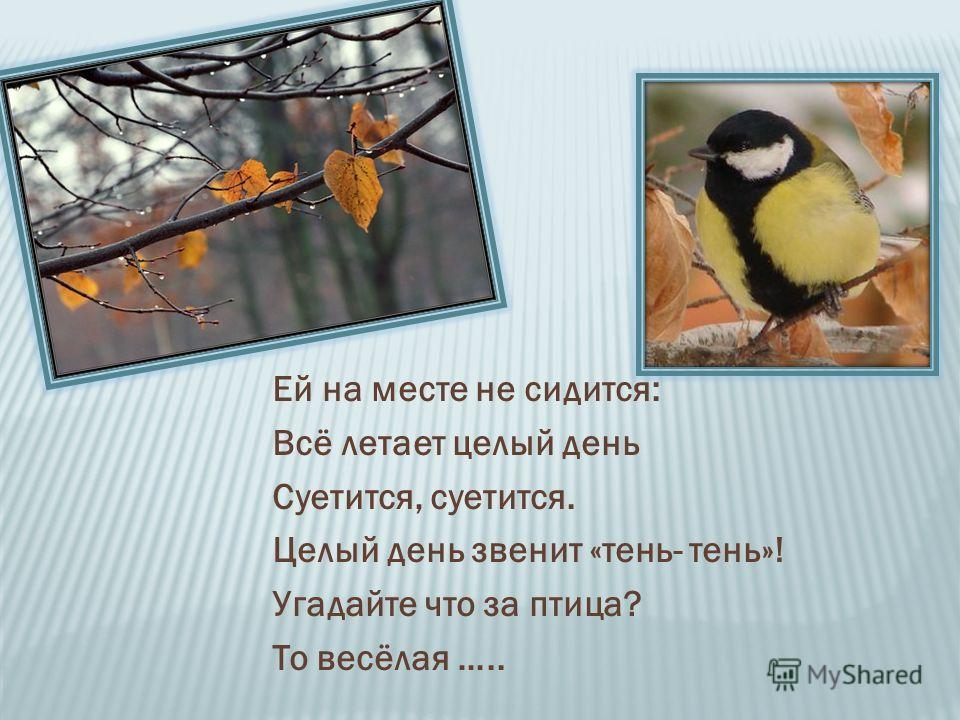 Ей на месте не сидится: Всё летает целый день Суетится, суетится. Целый день звенит «тень- тень»! Угадайте что за птица? То весёлая …..