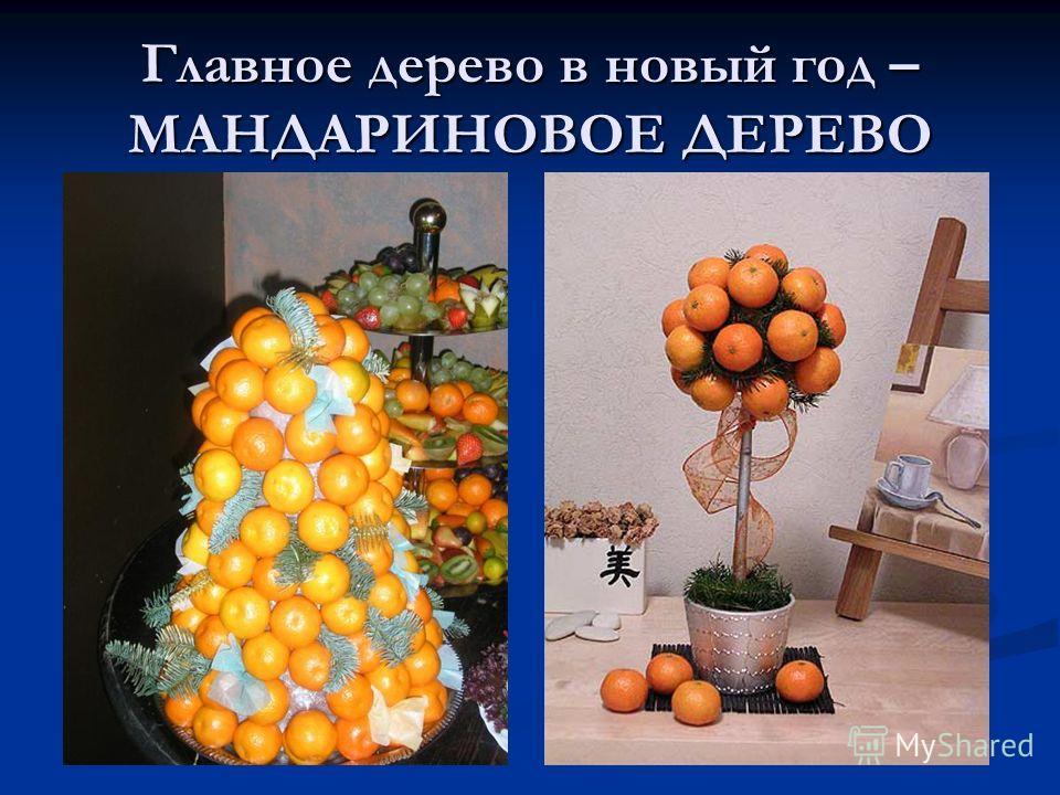 Главное дерево в новый год – МАНДАРИНОВОЕ ДЕРЕВО