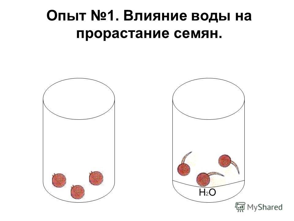 Опыт 1. Влияние воды на прорастание семян. H2OH2O