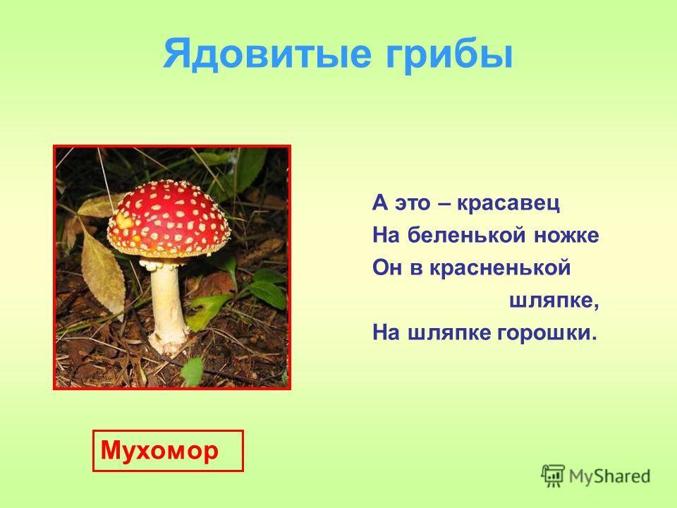 Ядовитые грибы А это – красавец На беленькой ножке Он в красненькой шляпке, На шляпке горошки. Мухомор