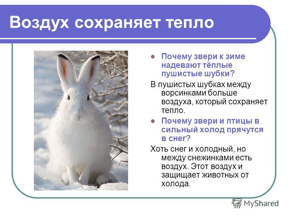 Воздух сохраняет тепло Почему звери к зиме надевают тёплые пушистые шубки? В пушистых шубках между ворсинками больше воздуха, который сохраняет тепло. Почему звери и птицы в сильный холод прячутся в снег? Хоть снег и холодный, но между снежинками ест