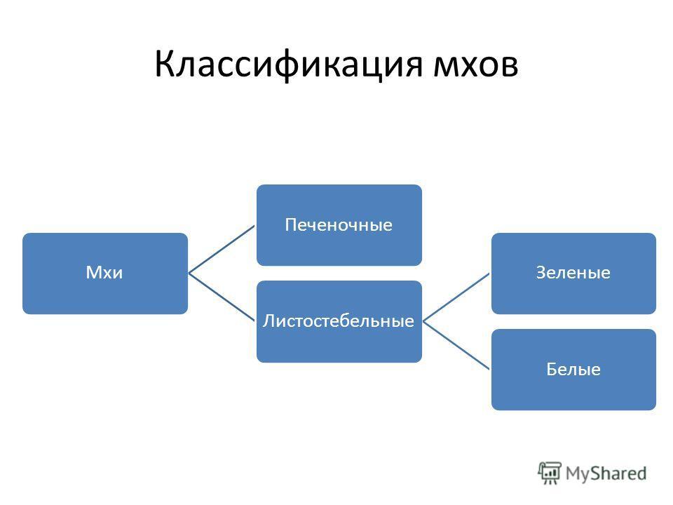 Классификация мхов Мхи ПеченочныеЛистостебельные ЗеленыеБелые