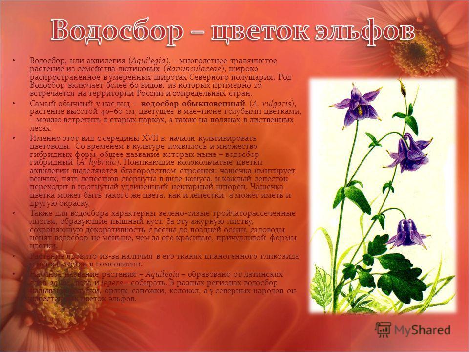 Водосбор, или аквилегия (Aquilegia), – многолетнее травянистое растение из семейства лютиковых (Ranunculaceae), широко распространенное в умеренных широтах Северного полушария. Род Водосбор включает более 60 видов, из которых примерно 20 встречается