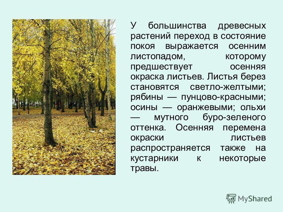У большинства древесных растений переход в состояние покоя выражается осенним листопадом, которому предшествует осенняя окраска листьев. Листья берез становятся светло-желтыми; рябины пунцово-красными; осины оранжевыми; ольхи мутного буро-зеленого от