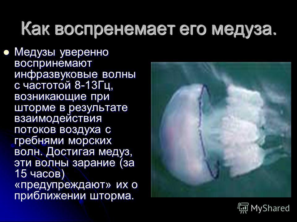 Как воспренемает его медуза. Медузы уверенно воспринемают инфразвуковые волны с частотой 8-13Гц, возникающие при шторме в результате взаимодействия потоков воздуха с гребнями морских волн. Достигая медуз, эти волны зарание (за 15 часов) «предупреждаю