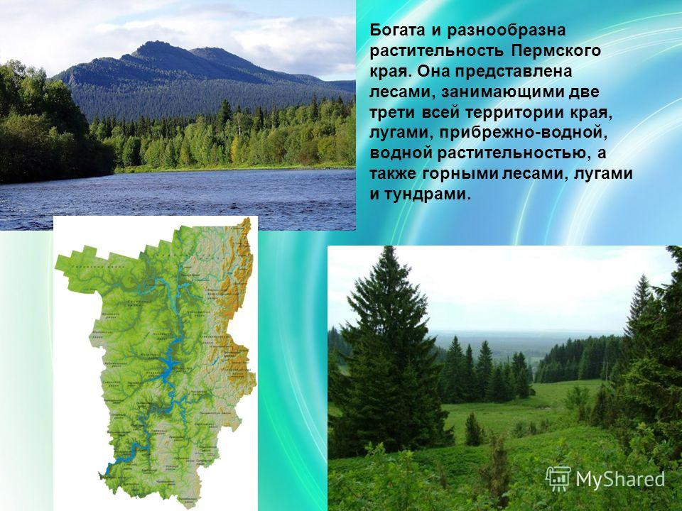 Богата и разнообразна растительность Пермского края. Она представлена лесами, занимающими две трети всей территории края, лугами, прибрежно-водной, водной растительностью, а также горными лесами, лугами и тундрами.