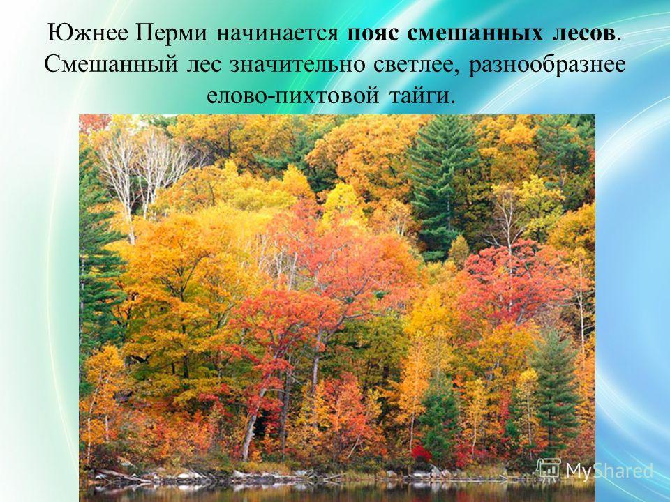 Южнее Перми начинается пояс смешанных лесов. Смешанный лес значительно светлее, разнообразнее елово-пихтовой тайги.