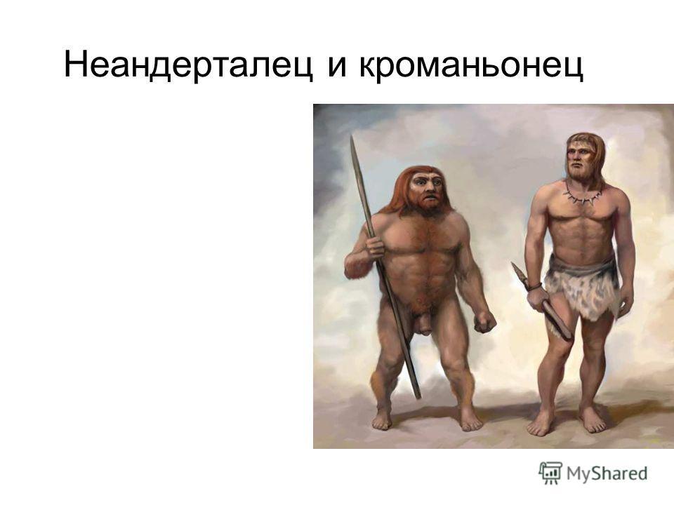 Неандерталец и кроманьонец Неандерталец и кроманьонец.
