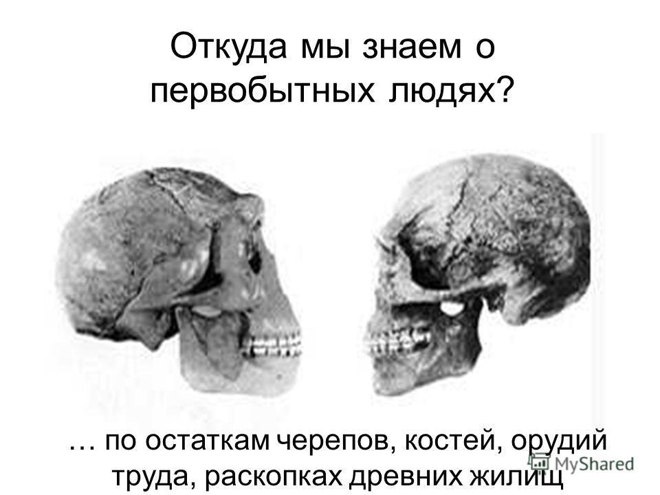 Откуда мы знаем о первобытных людях? … по остаткам черепов, костей, орудий труда, раскопках древних жилищ Откуда мы знаем о первобытных людях? … По остаткам черепов, костей, орудий труда, раскопках древних жилищ.