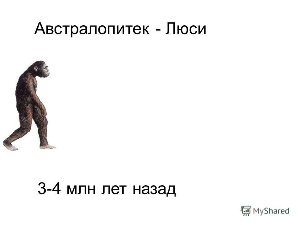Австралопитек - Люси. 3-4 млн лет назад. Австралопитек - Люси 3-4 млн лет назад