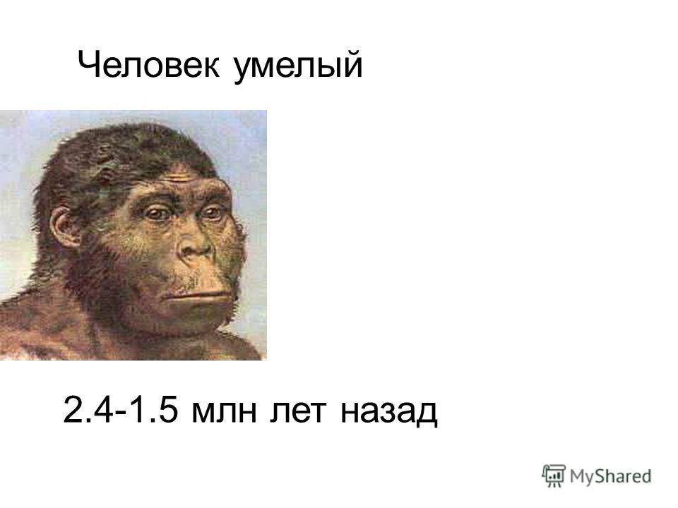 Человек умелый 2.4-1.5 млн лет назад Человек умелый. 2.4-1.5 млн лет назад.