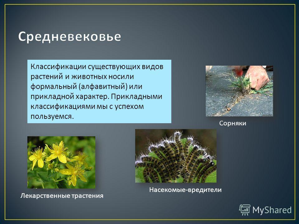 Классификации существующих видов растений и животных носили формальный ( алфавитный ) или прикладной характер. Прикладными классификациями мы с успехом пользуемся. Сорняки Лекарственные трастения Насекомые - вредители