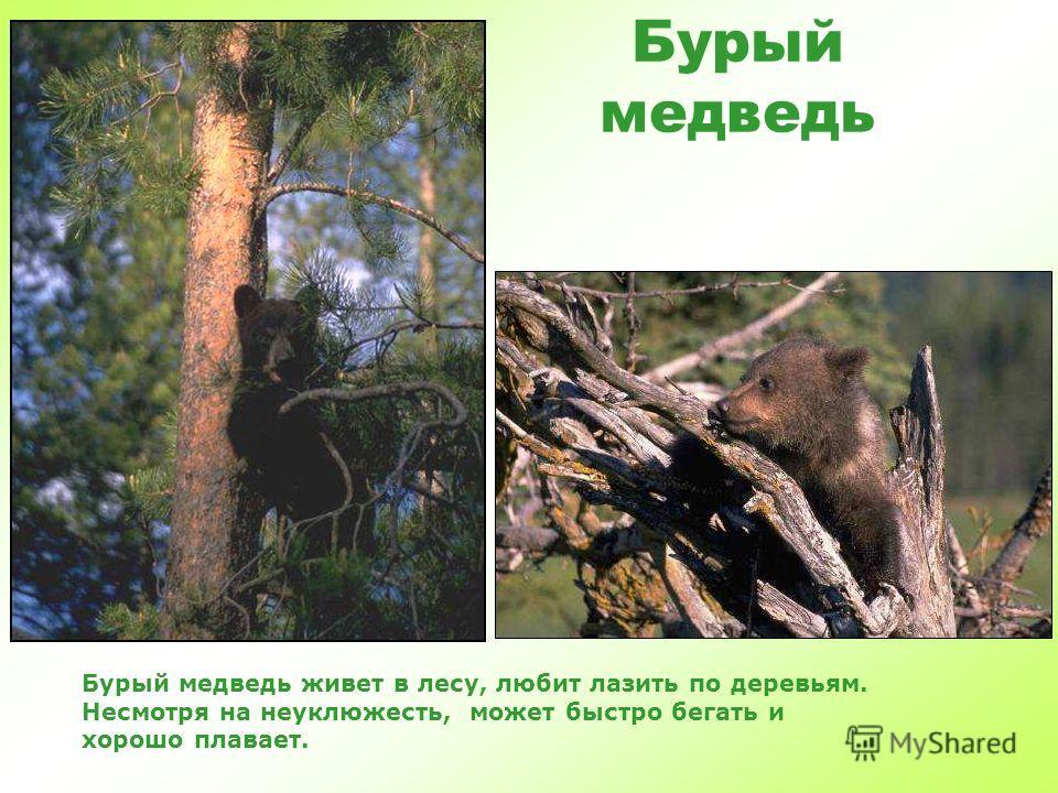 Дикие животные Дикие животные «жители леса» часть 1