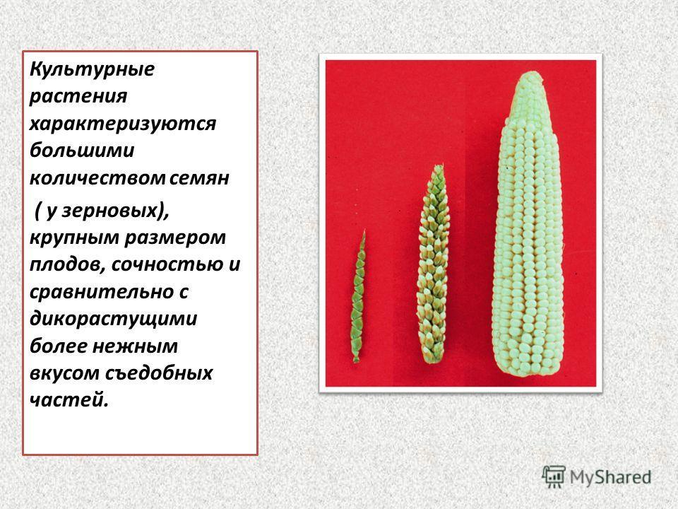 Культурные растения характеризуются большими количеством семян ( у зерновых), крупным размером плодов, сочностью и сравнительно с дикорастущими более нежным вкусом съедобных частей.