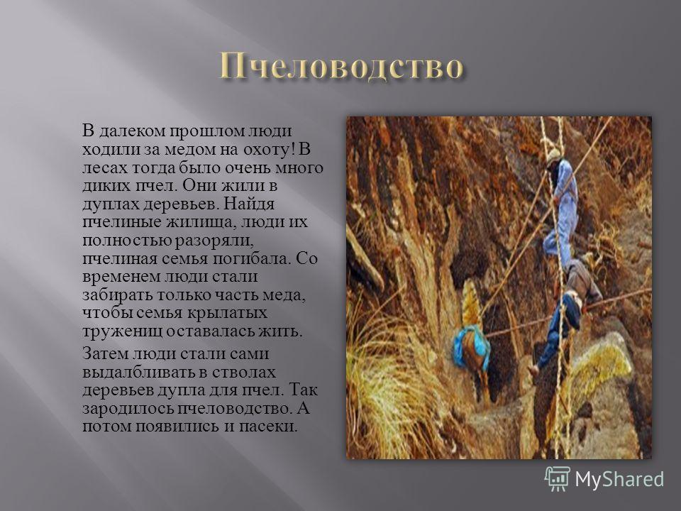 В далеком прошлом люди ходили за медом на охоту ! В лесах тогда было очень много диких пчел. Они жили в дуплах деревьев. Найдя пчелиные жилища, люди их полностью разоряли, пчелиная семья погибала. Со временем люди стали забирать только часть меда, чт