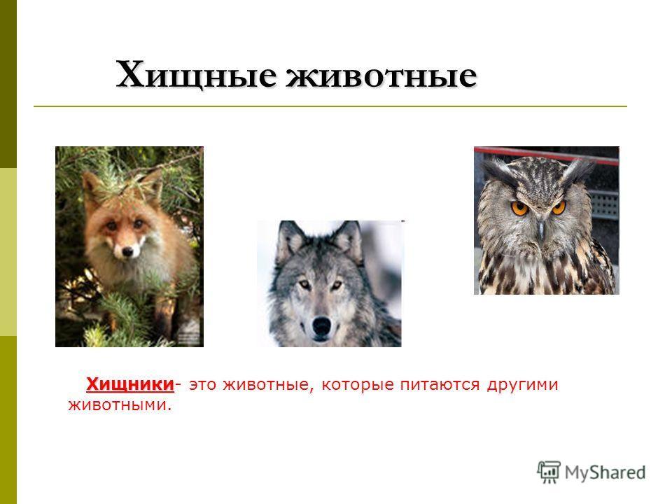 Хищные животные Хищники Хищники- это животные, которые питаются другими животными.