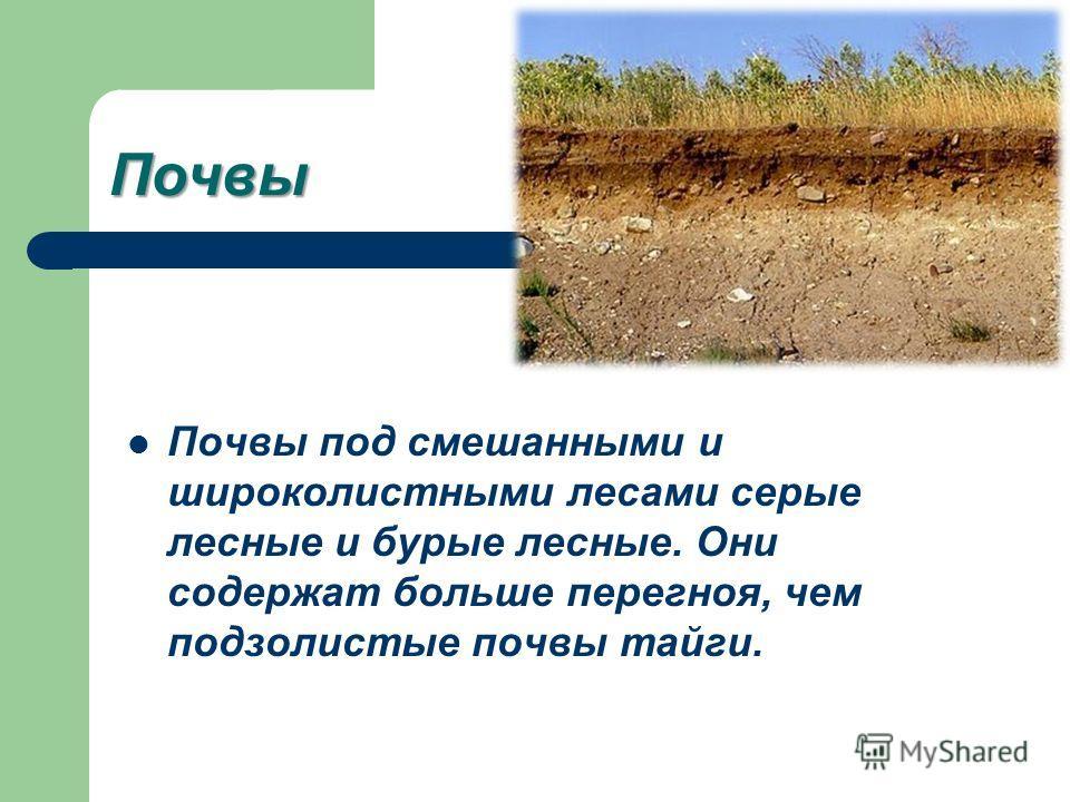 Почвы Почвы под смешанными и широколистными лесами серые лесные и бурые лесные. Они содержат больше перегноя, чем подзолистые почвы тайги.