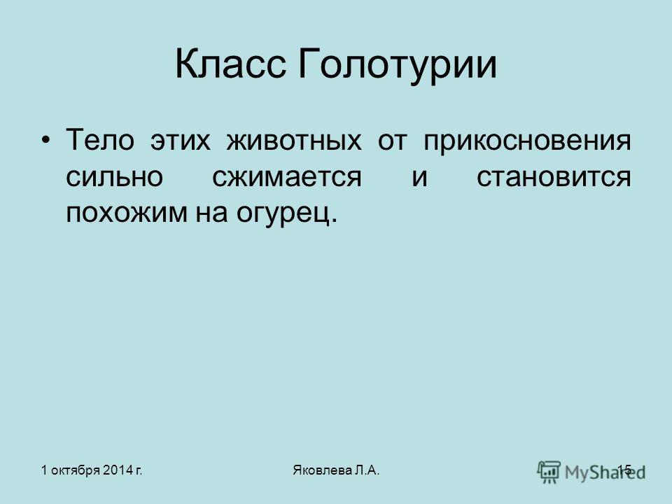 1 октября 2014 г.Яковлева Л.А.15 Класс Голотурии Тело этих животных от прикосновения сильно сжимается и становится похожим на огурец.