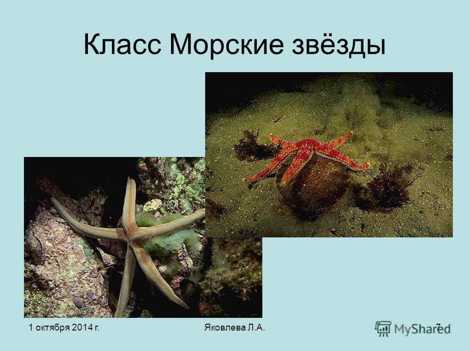 1 октября 2014 г.Яковлева Л.А.7 Класс Морские звёзды