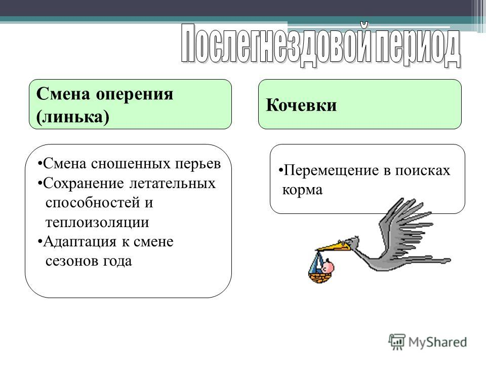 Смена оперения (линька) Кочевки Смена сношенных перьев Сохранение летательных способностей и теплоизоляции Адаптация к смене сезонов года Перемещение в поисках корма