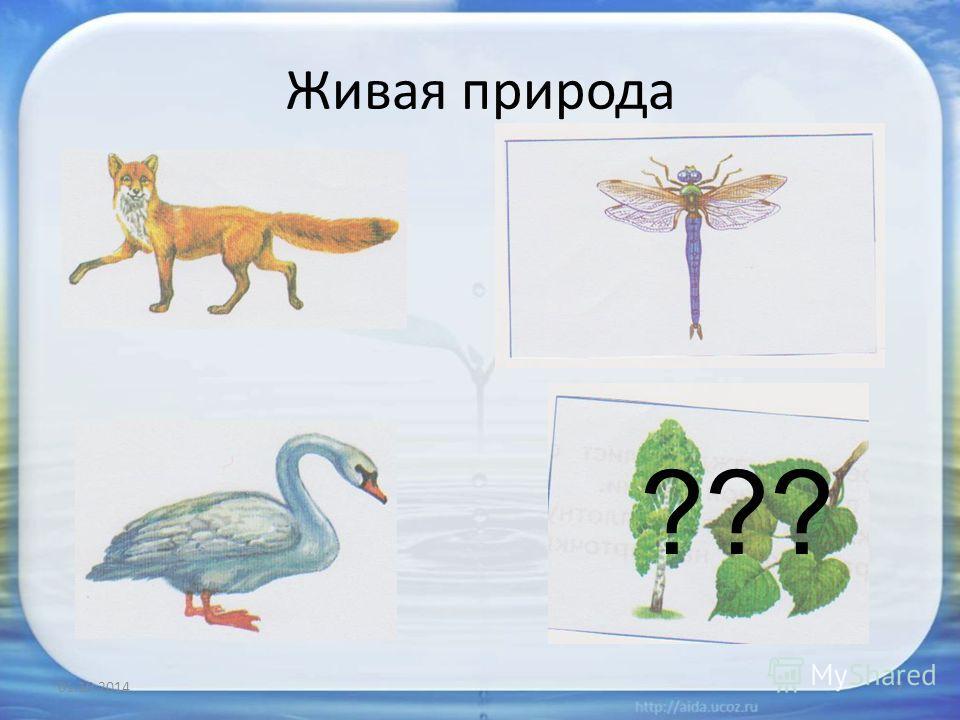 Живая природа 01.10.20147 ???