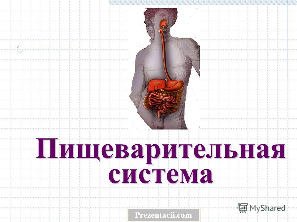 Пищеварительная система Prezentacii.com