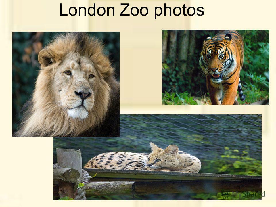 London Zoo photos
