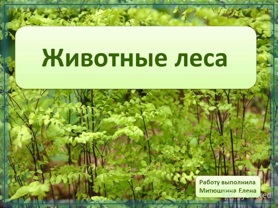 Животные леса Работу выполнила Митюшкина Елена Работу выполнила Митюшкина Елена