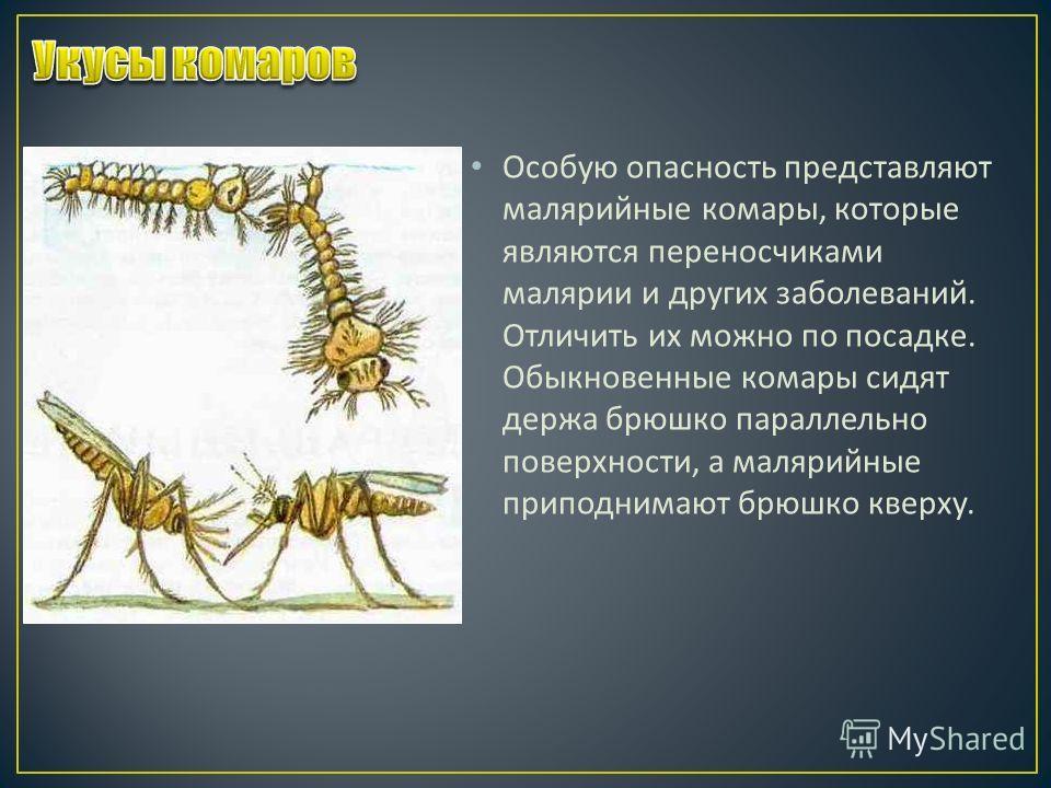 Особую опасность представляют малярийные комары, которые являются переносчиками малярии и других заболеваний. Отличить их можно по посадке. Обыкновенные комары сидят держа брюшко параллельно поверхности, а малярийные приподнимают брюшко кверху.