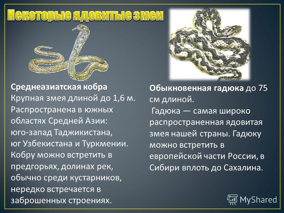 Среднеазиатская кобра Крупная змея длиной до 1,6 м. Распространена в южных областях Средней Азии : юго - запад Таджикистана, юг Узбекистана и Туркмении. Кобру можно встретить в предгорьях, долинах рек, обычно среди кустарников, нередко встречается в