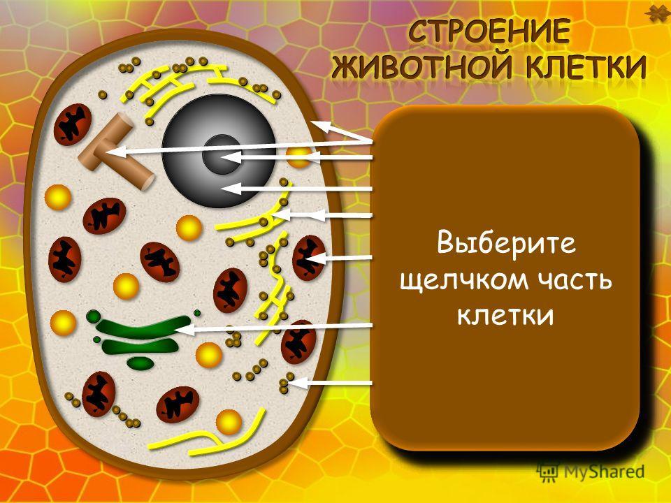 Клеточная мембрана находится под клеточной стенкой. Функции: ограничивает содержимое клетки; защищает клетку; регулирует обмен веществами с внешней средой. Клеточная мембрана находится под клеточной стенкой. Функции: ограничивает содержимое клетки; з