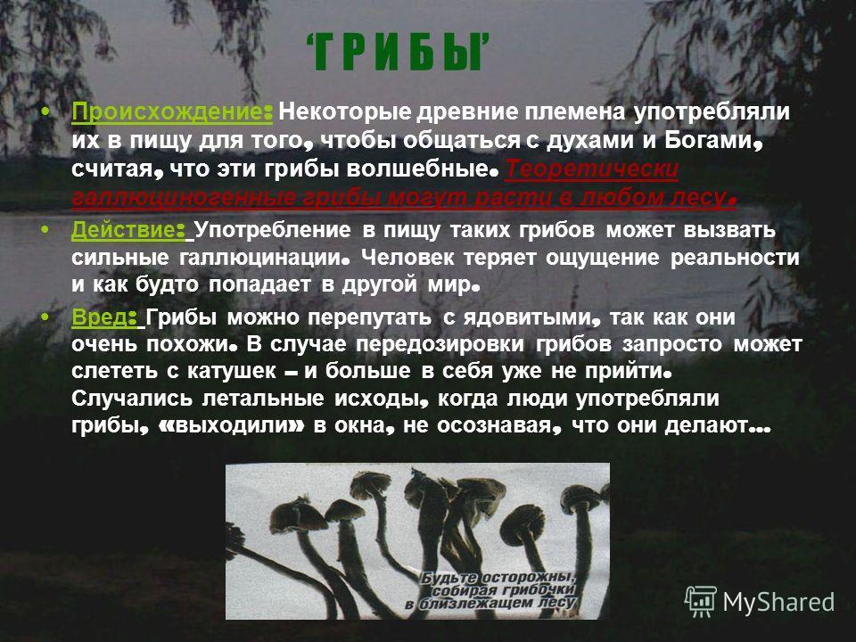 Г Р И Б Ы Происхождение : Некоторые древние племена употребляли их в пищу для того, чтобы общаться с духами и Богами, считая, что эти грибы волшебные. Теоретически галлюциногенные грибы могут расти в любом лесу. Действие : Употребление в пищу таких г