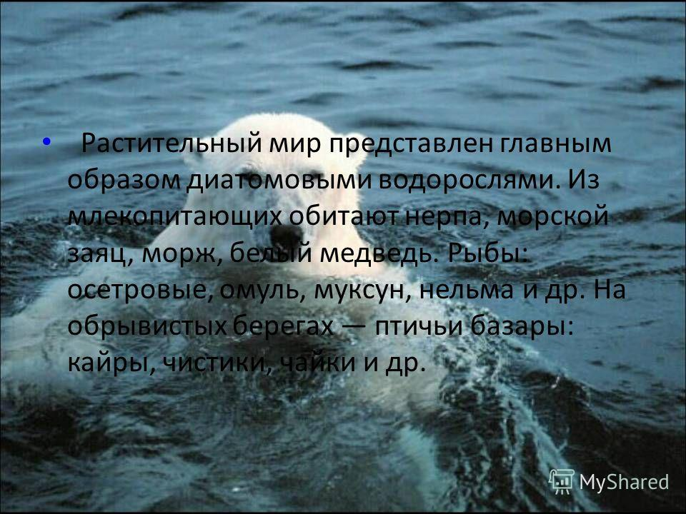 Площадь поверхности моря 672 000 км². Преобладают глубины до 50 м, наибольшая глубина 3385 метров, средняя глубина 540 метров. Берега сильно изрезаны. Крупные заливы: Хатангский, Оленёкский, Фаддея, Янский, Анабарский, бухта Марии Прончищевой, Буор-Х