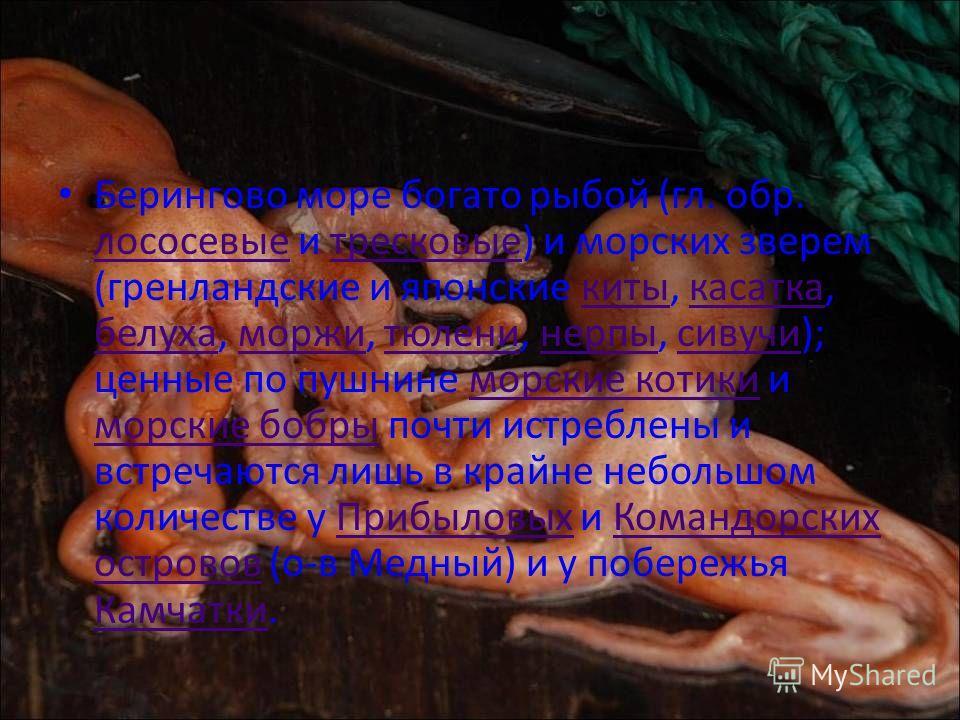 На российских картах XVIII века море называется Камчатским, или Бобровым морем [1]. Впервые название Берингово море появилось в последней четверти XVIII века, однако в широкий обиход было введено только в 1818 году русским мореплавателем В. М. Головн